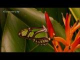 Страсти по насекомым 2. 7 серия -